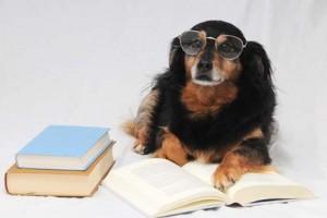 Hund als Student - Orchideenfächer an der Uni - seltene Studiengänge