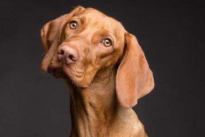 Hund schaut treudoof Kinder loben kann schaden